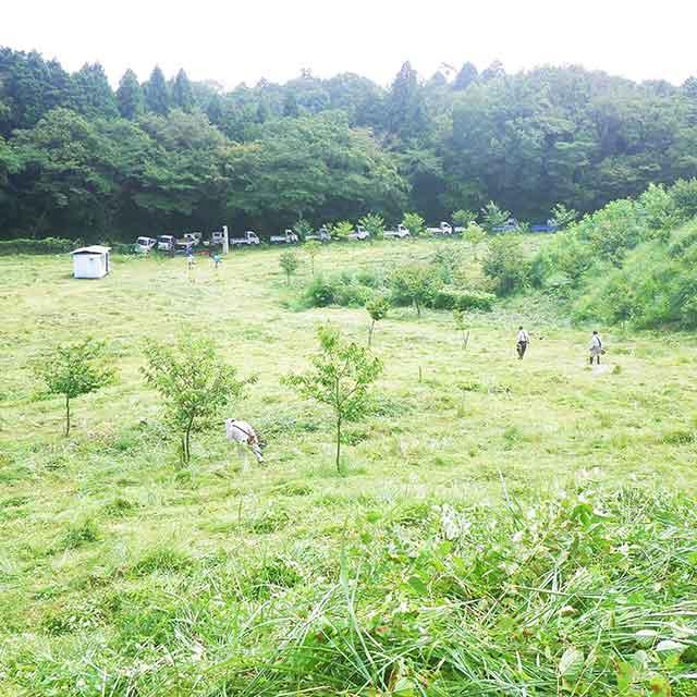 めぐみの森の整備