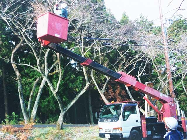 桜テングス病の枝除去作業