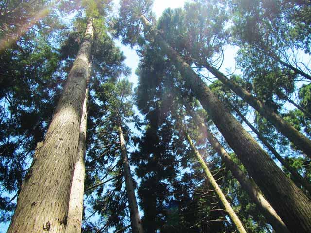 金勝の森林